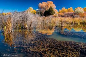 Autumn in Fred Baca Park - Taos New Mexico