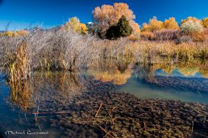 Autumn in Fred Baca Park - Taos